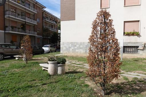 Bra: a novembre nuove piantumazioni di alberi da parte del Comune