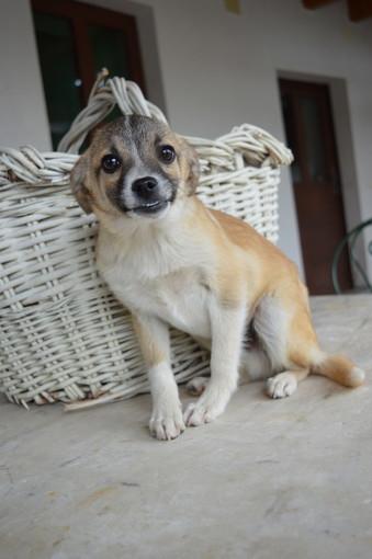 Un cucciolo di 5 mesi sta cercando casa: per contatti ricolgersi alla GEA di Mondovì