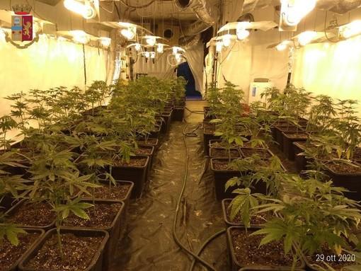 """47 chili di marijuana e 225 piantine in una cascina di Canelli: espulso dall'Italia il giovane """"coltivatore"""" albanese"""