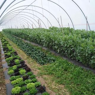Una serra dell'azienda con alcune colture