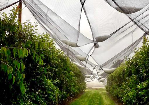 Balzo dei prezzi nel carrello: clima balordi, la frutta schizza a +11,1% rispetto ad un anno fa