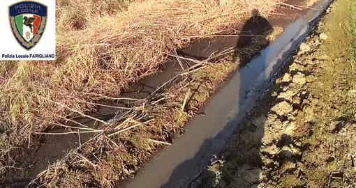 Liquami suini finivano in Tanaro: allevatore di Farigliano deferito per smaltimento illecito di rifiuti