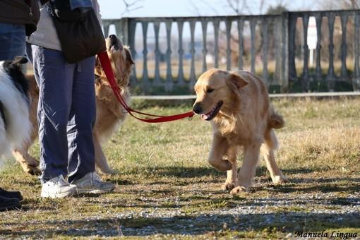 A Carrù nasce l'asilo per cani