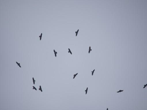 Giornata mondiale degli uccelli migratori: quasi 4 mila i passaggi osservati al Bric Lombatera di Paesana