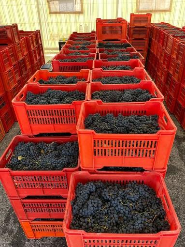 Nell'area Miac di Ronchi è tornato il mercato delle uve