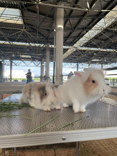 A Cuneo torna il mercatino dei piccoli animali