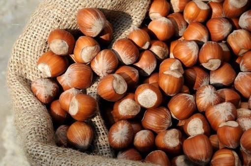 Il futuro delle nocciole in una tavola rotonda all'annuale fiera di Castagnole delle Lanze