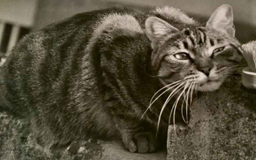 """""""Obiettivo... gatto"""": mostra fotografica di Marilaide Ghigliano a Ormea"""