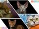 """Partecipa al contest """"Il misterioso mondo felino"""" con Petsfestival"""