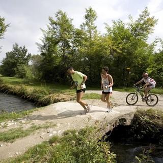 """Cuneo, le acque """"di prima pioggia"""" del viadotto della Pace nel Parco Fluviale: """"Sono inquinanti"""""""