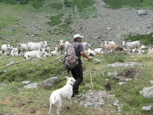 Coldiretti Cuneo chiede rispetto e tutela per l'agricoltura e la pastorizia