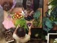 La preparazione delle verdure appena raccolte
