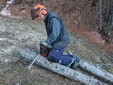 Luigi al lavoro nel bosco