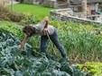 Daniele al lavoro nel terreno di ortaggi in piena produzione