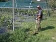Gabriele impegnato nel taglio dell'erba con il decespugliatore