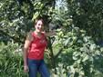 Tra le antiche varietà di mele