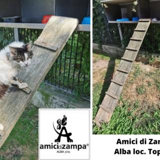Amici di Zampa cerca falegnami volontari