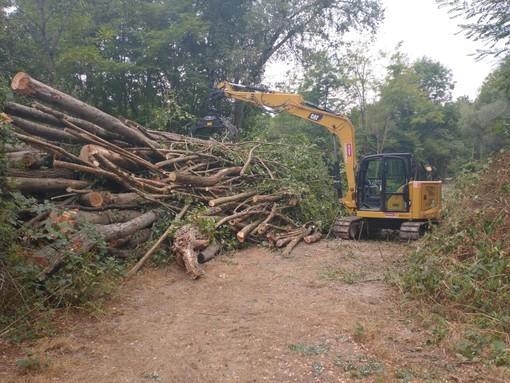 A Roccaforte Mondovì conclusi gli interventi per rimuovere la vegetazione che rischiava di ostruire il corso del fiume  [FOTO]