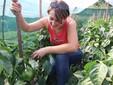 La coltivazione di peperoni