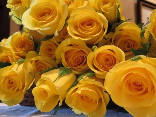 Rose gialle, simbolo del club Zonta