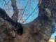"""A Racconigi, reti per i piccioni in vale Monumentale: """"La ditta controllerà quelle danneggiate in cui possono restare intrappolati gli animali"""""""