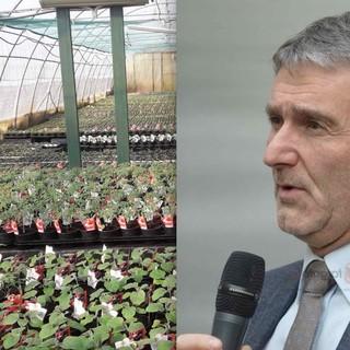 La serra di un'azienda vivaistica e il vicepresidente della Commissione Agricoltura in Senato, il cuneese Mino Taricco