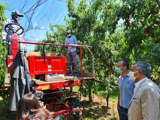 Icardi nei frutteti dell'azienda Giovanni Lungo e, insieme al capitano dei Carabinieri Beltempo, nel parco Gullino