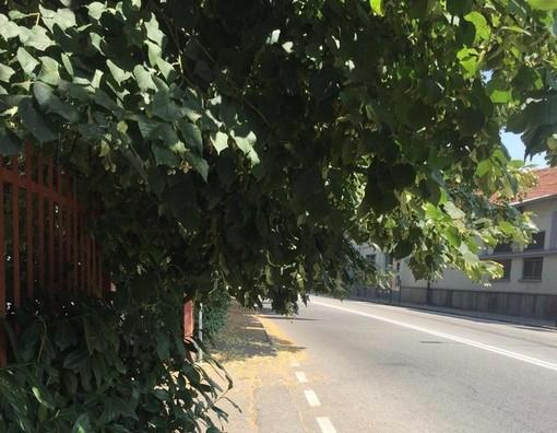 Boves, ordinanza del Comune per il taglio di siepi e la potatura di rami sporgenti sulle strade