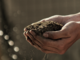 Csea: corsi di formazione sul compostaggio domestico per tutti i cittadini