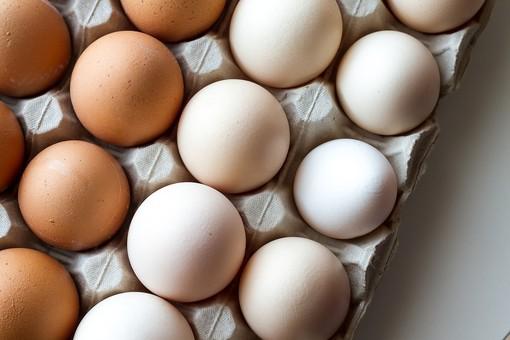 """Residui di Fipronil nelle uova, assolti """"perché il fatto non sussiste"""" titolari di un'azienda cuneese"""