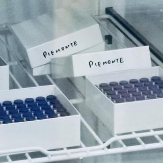 """Icardi: """"Per la seconda fase vaccinale arriveranno in supporto un migliaio tra medici e infermieri"""""""