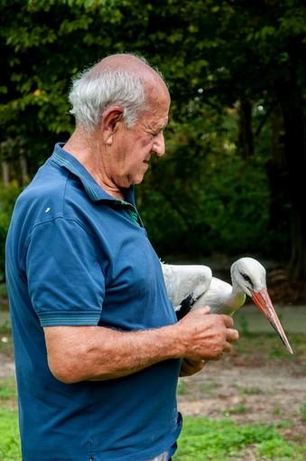 Pronta per essere liberata la quarta cicogna recuperata dal CRAS di Racconigi