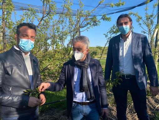 Protopapa nel saluzzese per i danni causati dal gelo in agricoltura: ultima tappa a Lagnasco (FOTO e VIDEO)