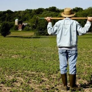 In arrivo il Bando regionale a sostegno dei giovani agricoltori piemontesi sulle misure del Programma di sviluppo rurale del Piemonte per il biennio di transizione 2021-2022