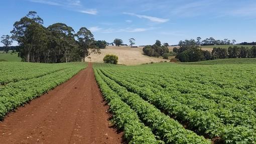 """Emergenza Covid-19, Cia: """"L'agricoltura, anche se è crisi, non si ferma"""""""