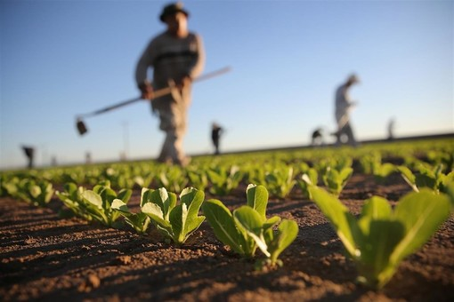 Coronavirus, quasi immune la campagna piemontese: tre su mille i lavoratori dell'agricoltura contagiati