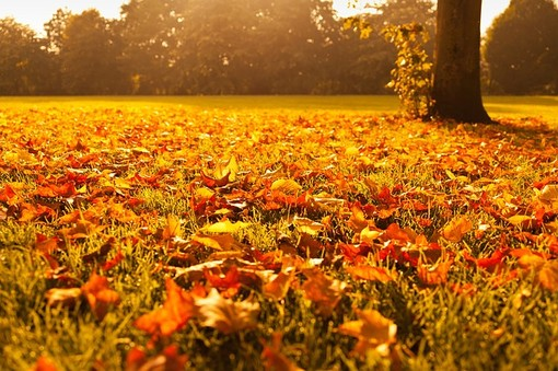 Buon weekend di autunno: nubi alte e sole, ma senza piogge