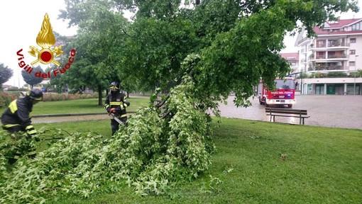 Decine di chiamate ai vigili del fuoco per allagamenti e alberi pericolanti