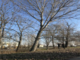 Bra, tre alberi a rischio caduta sulle sponde del rio in via Rolfo