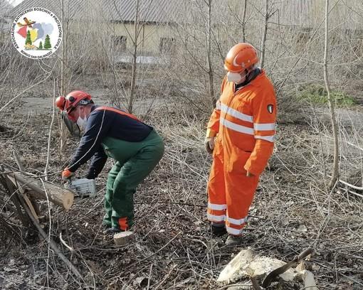 Gli Aib di Borgo San Dalmazzo tagliano la legna alla caserma Mario Fiore