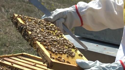 Giornata della Terra: tuteliamo le api perché senza di loro è a rischio la biodiversità del pianeta (VIDEO)