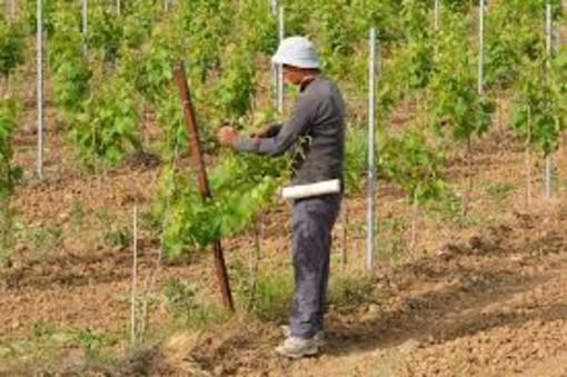 Confagricoltura Piemonte: serve manodopera, ecco una soluzione