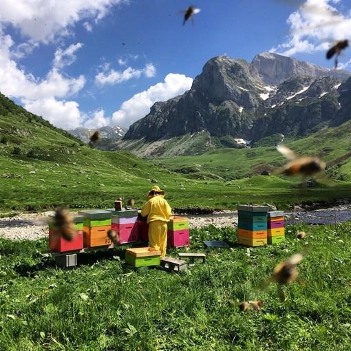 Giornata mondiale delle api: due eventi online organizzati dal Comizio agrario di Mondovì