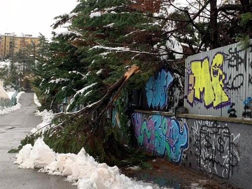 Alberi crollati e danni anche nell'area dell'Ex Nuvolari a Cuneo