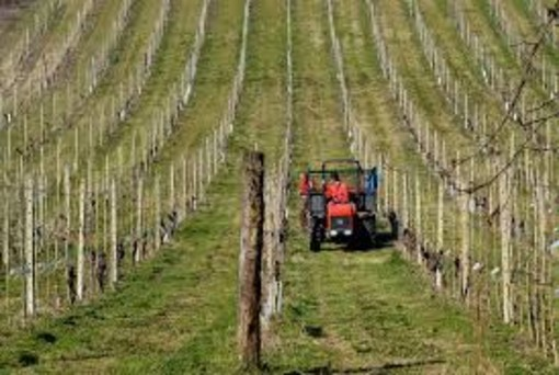 """Stati generali, Coldiretti Cuneo: """"Sostegno all'agricoltura per una vera ripartenza"""""""