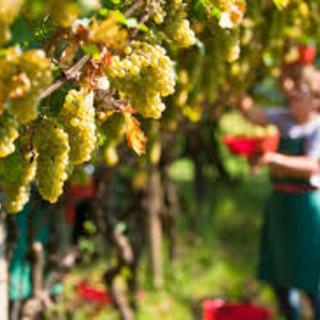 Qualità dell'aria, si rischia blocco dell'attività agricola: Coldiretti Cuneo chiede di ridefinire gli interventi