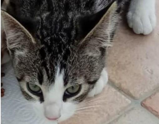 Smarrito gattino a Beinette