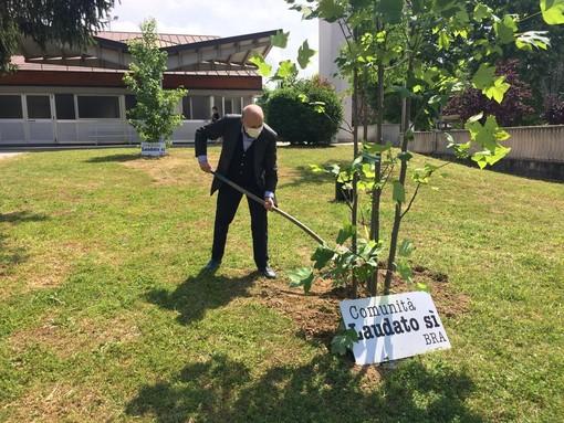 Bra, sette alberi in più contro la crisi climatica, grazie alla Comunità Laudato Si' Bra 2 (Vedi foto)