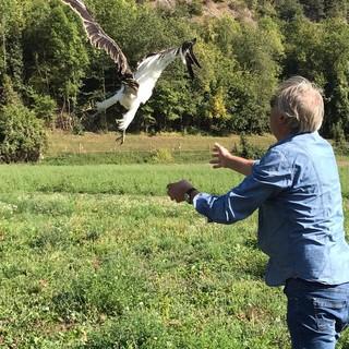 Curato al Cras di Bernezzo, uno splendido esemplare di biancone ha ripreso il suo lungo viaggio verso l'Africa
