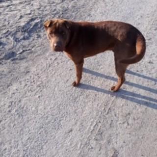 Si cerca un cane smarrito a Cavallermaggiore